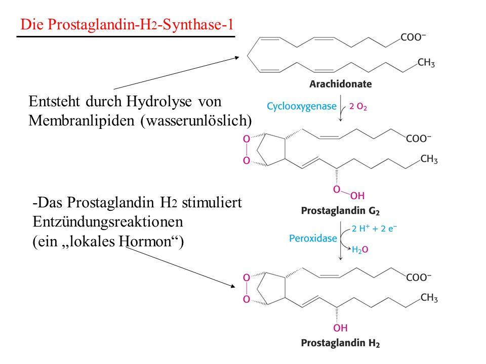 Die Prostaglandin-H 2 -Synthase-1 Entsteht durch Hydrolyse von Membranlipiden (wasserunlöslich) -Das Prostaglandin H 2 stimuliert Entzündungsreaktione