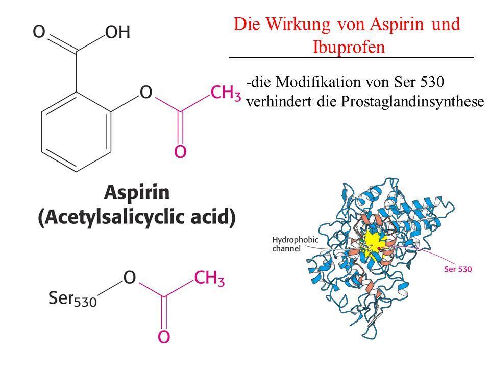 Die Wirkung von Aspirin und Ibuprofen -die Modifikation von Ser 530 verhindert die Prostaglandinsynthese