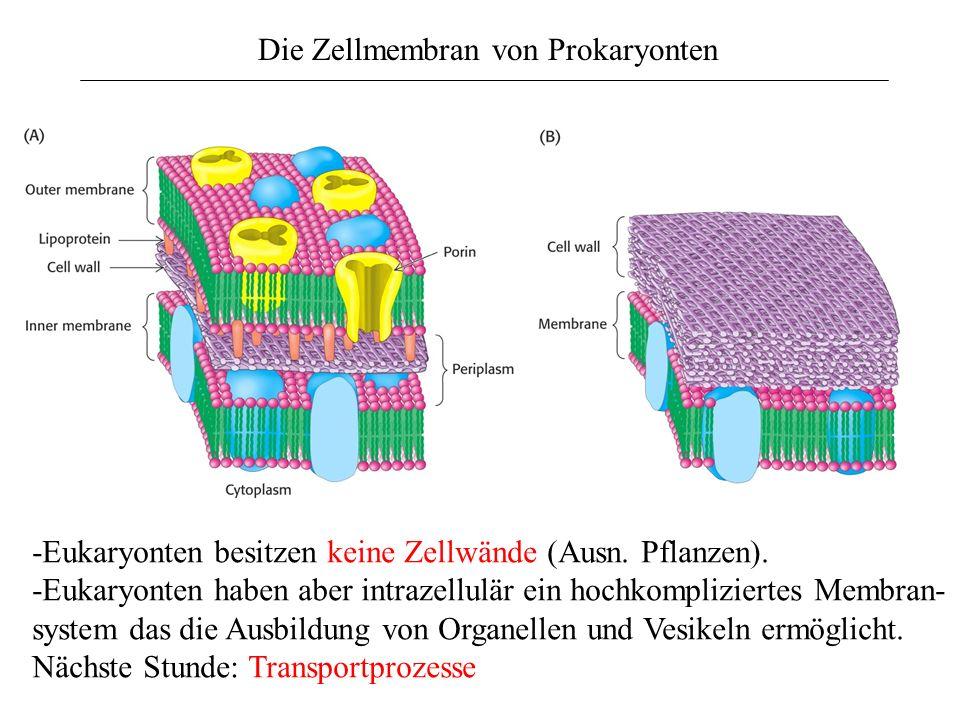 Die Zellmembran von Prokaryonten -Eukaryonten besitzen keine Zellwände (Ausn. Pflanzen). -Eukaryonten haben aber intrazellulär ein hochkompliziertes M
