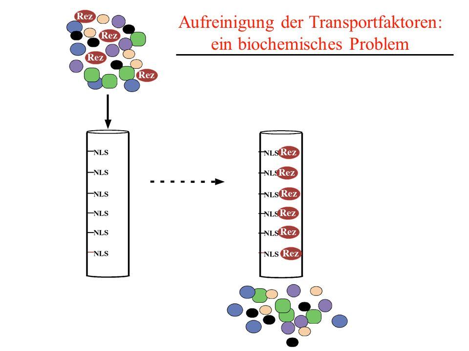 Aufreinigung der Transportfaktoren: ein biochemisches Problem
