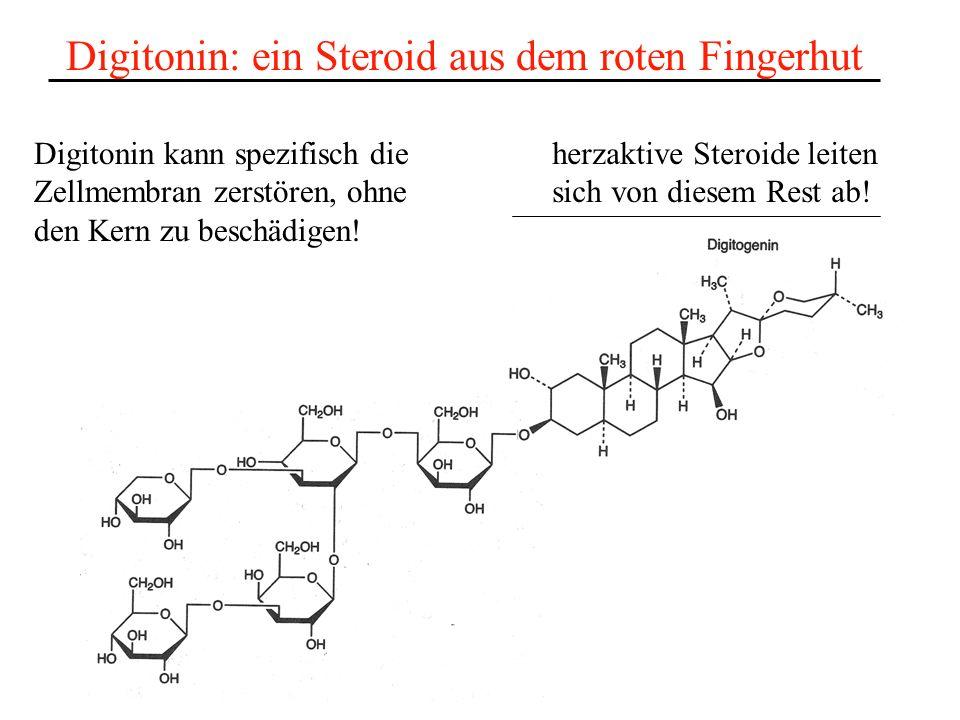 Digitonin: ein Steroid aus dem roten Fingerhut herzaktive Steroide leiten sich von diesem Rest ab! Digitonin kann spezifisch die Zellmembran zerstören