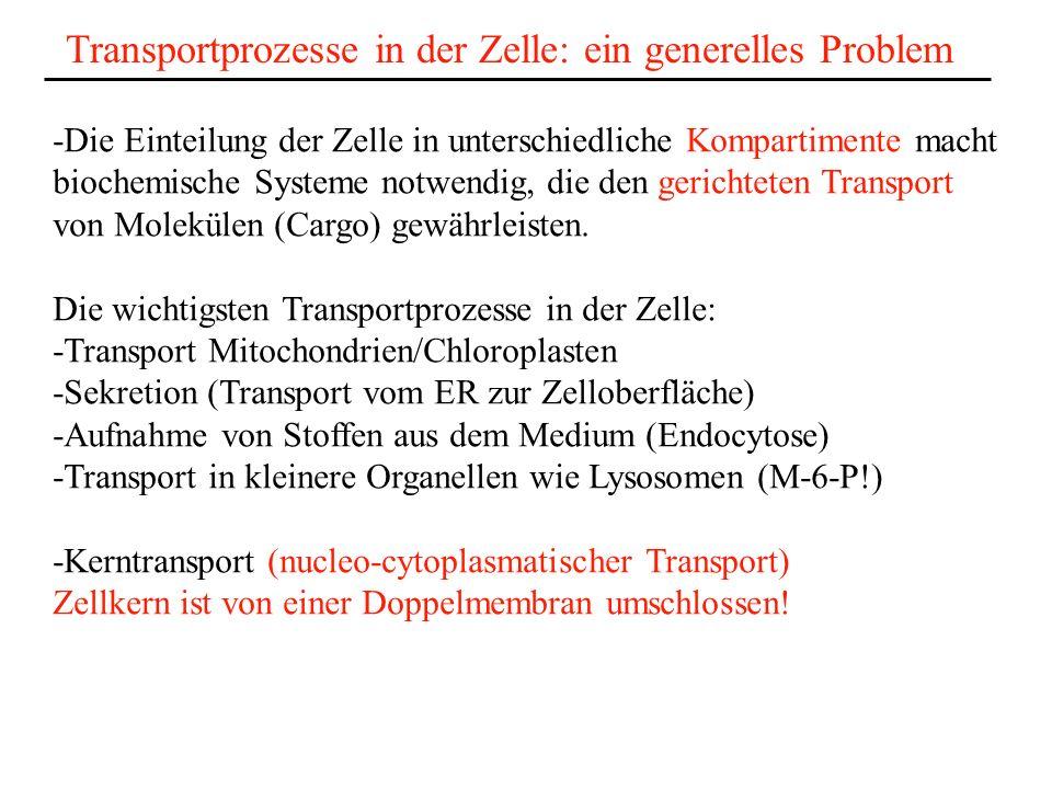 Transportprozesse in der Zelle: ein generelles Problem -Die Einteilung der Zelle in unterschiedliche Kompartimente macht biochemische Systeme notwendig, die den gerichteten Transport von Molekülen (Cargo) gewährleisten.