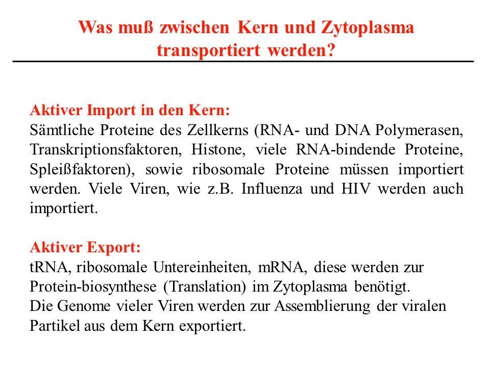 Was muß zwischen Kern und Zytoplasma transportiert werden? Aktiver Import in den Kern: Sämtliche Proteine des Zellkerns (RNA- und DNA Polymerasen, Tra