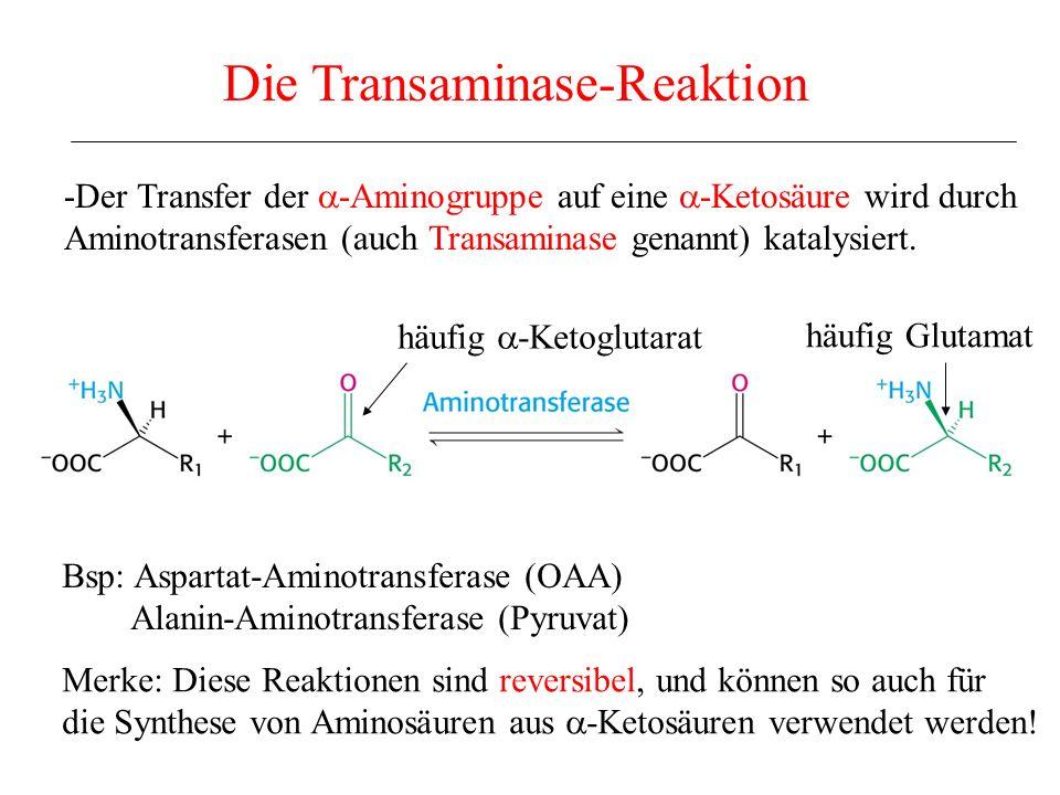 Die oxidative Desaminierung: 1.Schritt Glutamat-Dehydrogenase Vergleiche zur Oxidation von Alkoholen