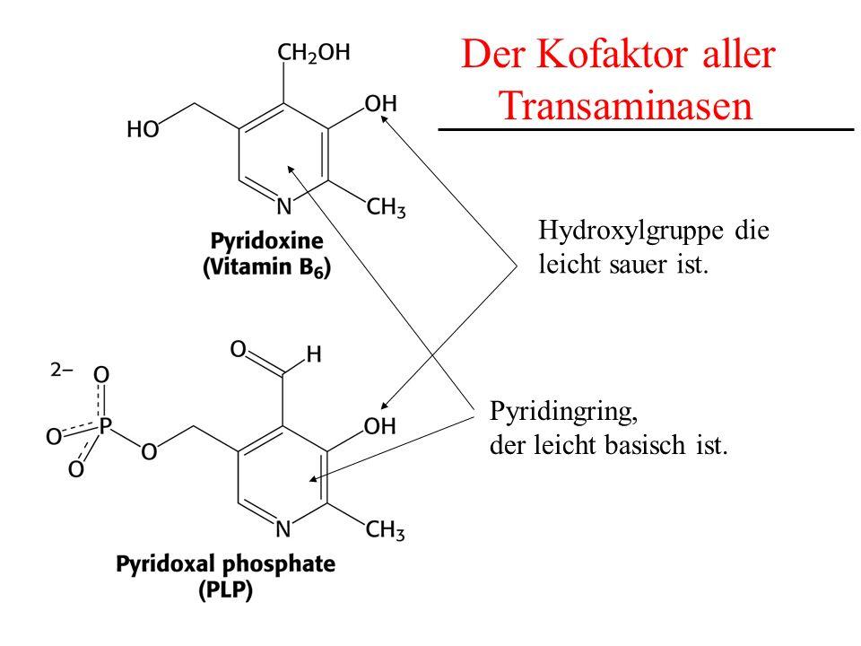 die Aldehydgruppe ist wichtig für die Transaminierungsreaktion, da sie Schiff-Basen mit primären Aminen ausbilden kann Der Kofaktor Pyridoxalphosphat