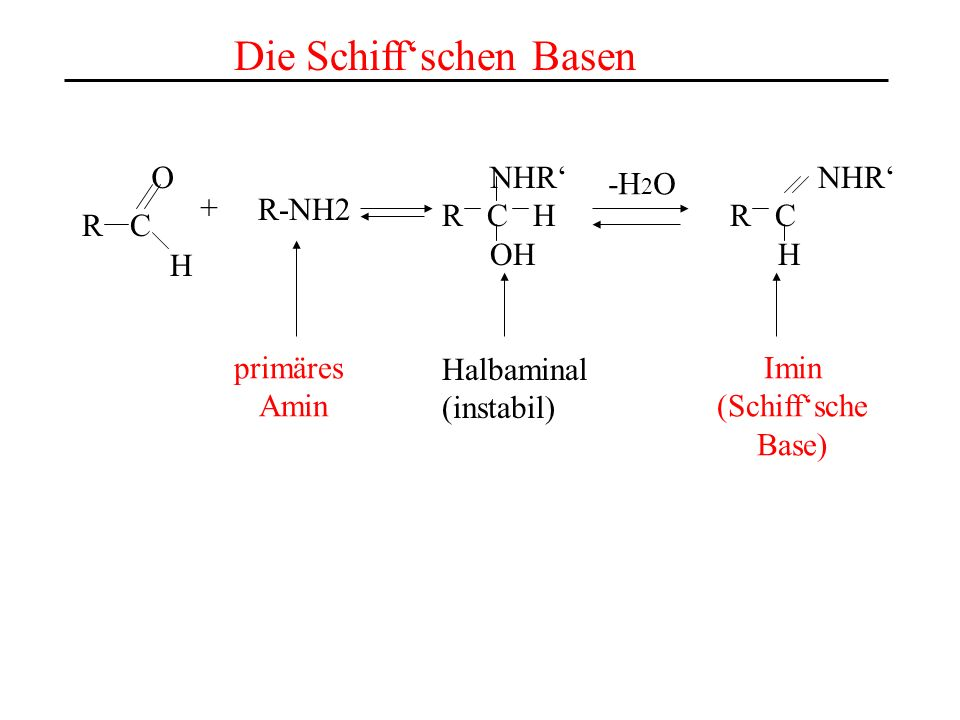 As aus dem aktiven Zentrum des Enzyms Ein internes Aldimin wird zu einem externen Aldimin As die desaminiert werden soll PLP im aktiven Zentrum