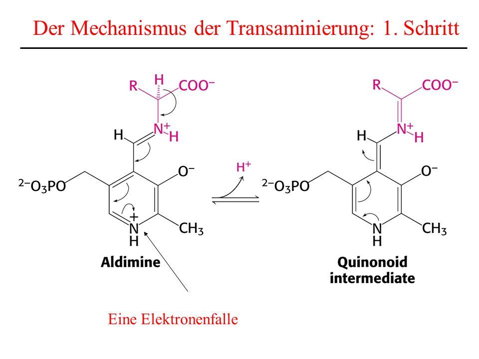 Der letzte Schritt: Die Abspaltung von Harnstoff zurück in die Matrix der Mitos zur Reaktion mit Carbamoylphosphat wird ausgeschieden Asp NH 4 +