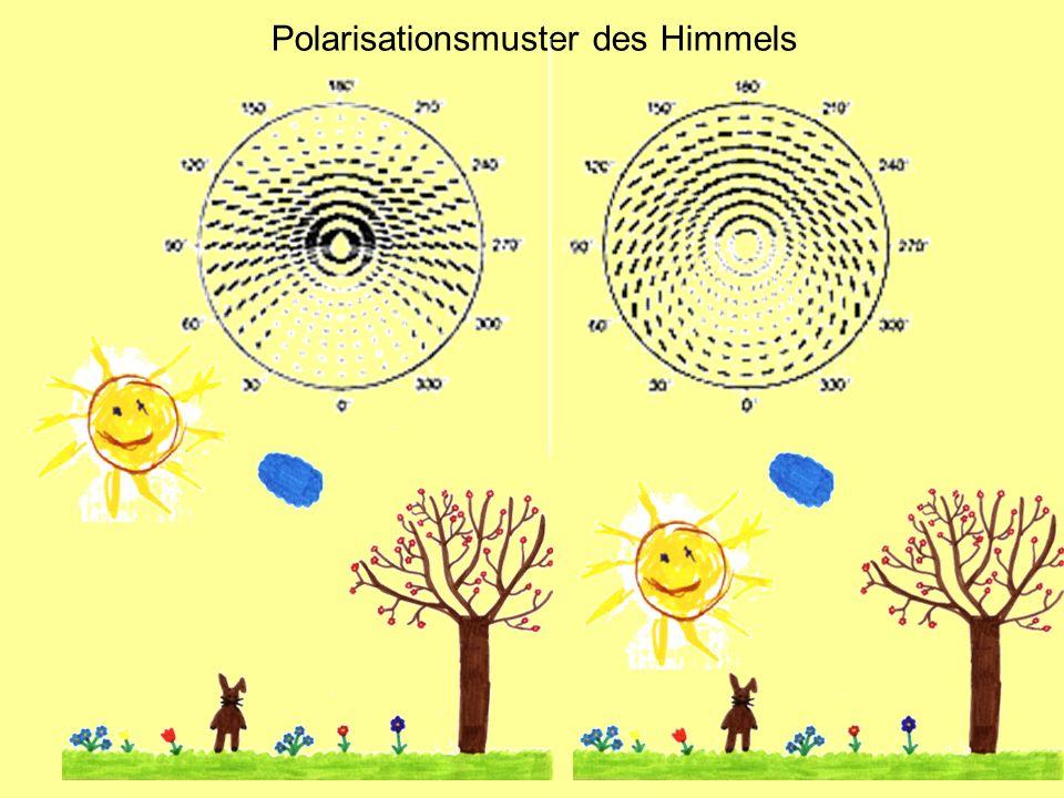 Polarisationsmuster des Himmels