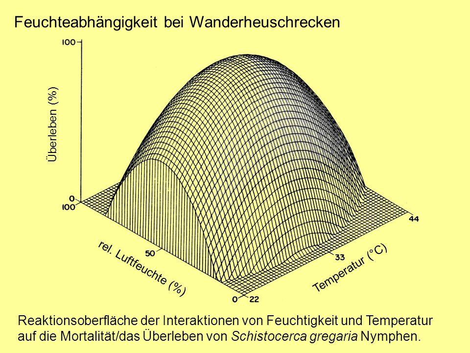Feuchteabhängigkeit bei Wanderheuschrecken Reaktionsoberfläche der Interaktionen von Feuchtigkeit und Temperatur auf die Mortalität/das Überleben von Schistocerca gregaria Nymphen.