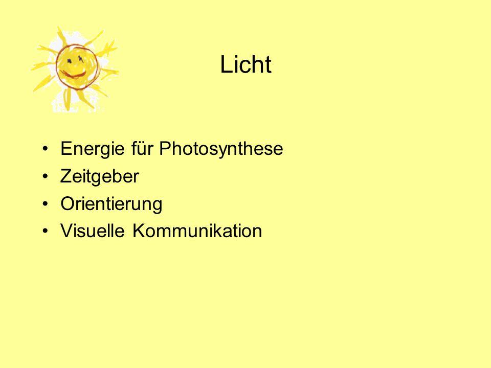 Licht Energie für Photosynthese Zeitgeber Orientierung Visuelle Kommunikation