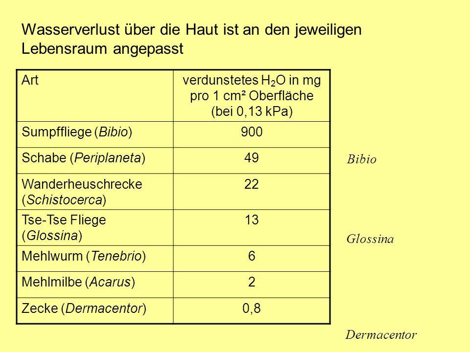 Wasserverlust über die Haut ist an den jeweiligen Lebensraum angepasst Bibio Dermacentor Artverdunstetes H 2 O in mg pro 1 cm² Oberfläche (bei 0,13 kPa) Sumpffliege (Bibio)900 Schabe (Periplaneta)49 Wanderheuschrecke (Schistocerca) 22 Tse-Tse Fliege (Glossina) 13 Mehlwurm (Tenebrio)6 Mehlmilbe (Acarus)2 Zecke (Dermacentor)0,8 Glossina