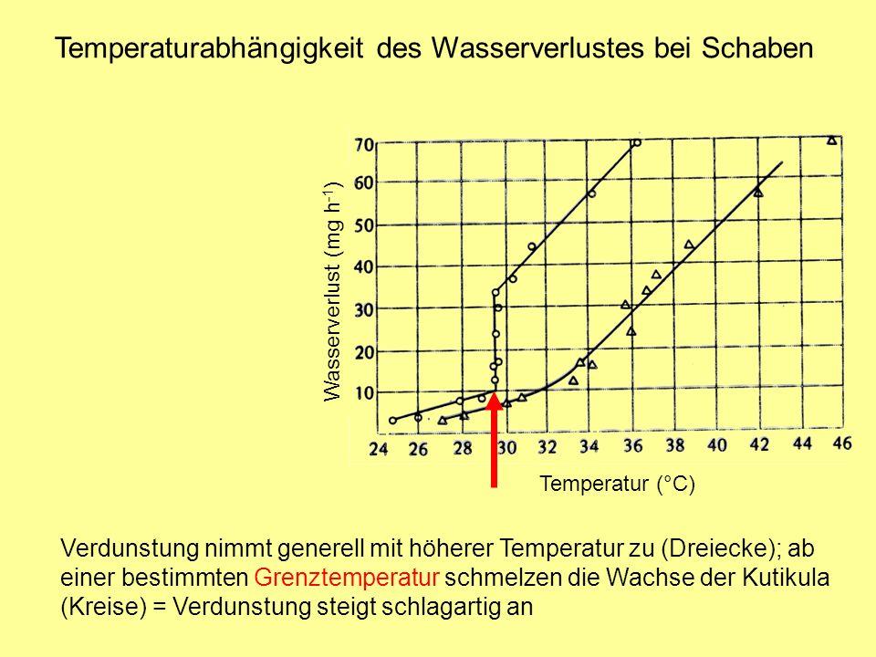 Temperaturabhängigkeit des Wasserverlustes bei Schaben Temperatur (°C) Wasserverlust (mg h -1 ) Verdunstung nimmt generell mit höherer Temperatur zu (Dreiecke); ab einer bestimmten Grenztemperatur schmelzen die Wachse der Kutikula (Kreise) = Verdunstung steigt schlagartig an