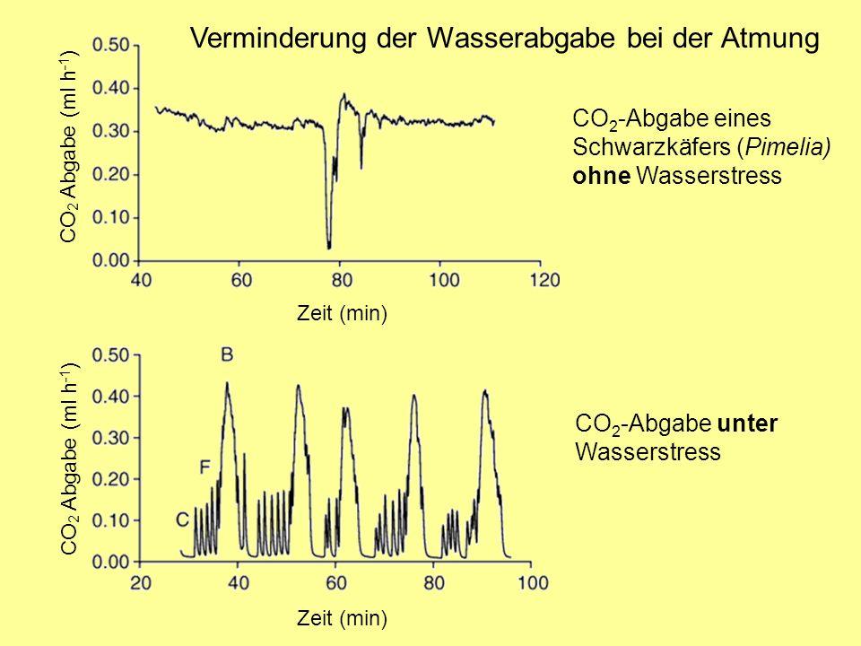 CO 2 -Abgabe eines Schwarzkäfers (Pimelia) ohne Wasserstress Verminderung der Wasserabgabe bei der Atmung Zeit (min) CO 2 Abgabe (ml h -1 ) CO 2 -Abgabe unter Wasserstress CO 2 Abgabe (ml h -1 ) Zeit (min)