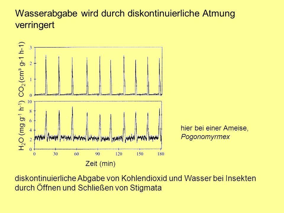 Wasserabgabe wird durch diskontinuierliche Atmung verringert CO 2 (cm³ g-1 h-1) H 2 O (mg g -1 h -1 ) hier bei einer Ameise, Pogonomyrmex diskontinuierliche Abgabe von Kohlendioxid und Wasser bei Insekten durch Öffnen und Schließen von Stigmata Zeit (min)