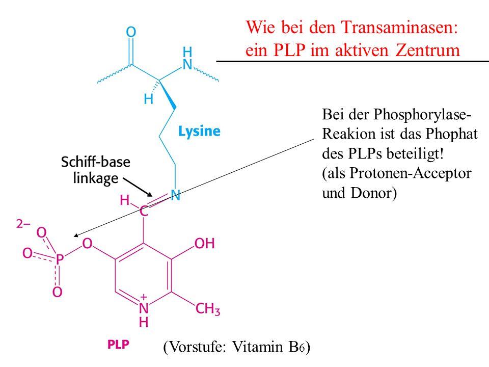 Wie bei den Transaminasen: ein PLP im aktiven Zentrum (Vorstufe: Vitamin B 6 ) Bei der Phosphorylase- Reakion ist das Phophat des PLPs beteiligt! (als