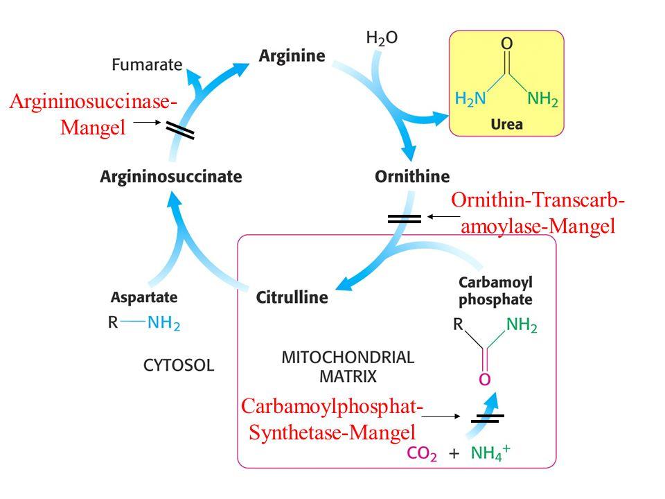 Argininosuccinase- Mangel Carbamoylphosphat- Synthetase-Mangel Ornithin-Transcarb- amoylase-Mangel
