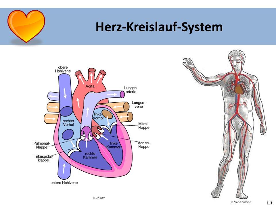 1.3 Herz-Kreislauf-System © Sansculotte © Jakov