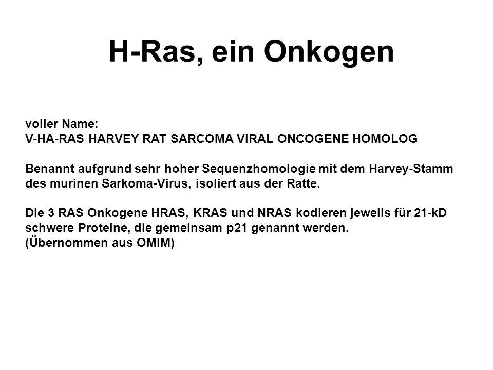 H-Ras, ein Onkogen voller Name: V-HA-RAS HARVEY RAT SARCOMA VIRAL ONCOGENE HOMOLOG Benannt aufgrund sehr hoher Sequenzhomologie mit dem Harvey-Stamm des murinen Sarkoma-Virus, isoliert aus der Ratte.
