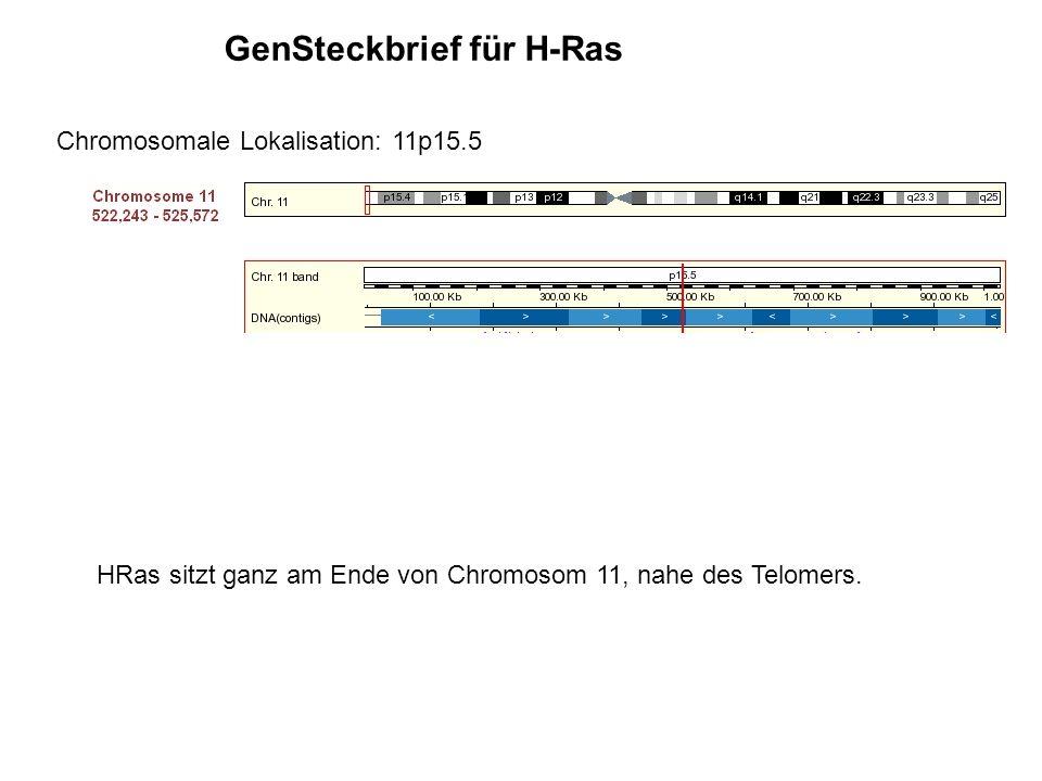 GenSteckbrief für H-Ras Chromosomale Lokalisation: 11p15.5 HRas sitzt ganz am Ende von Chromosom 11, nahe des Telomers.