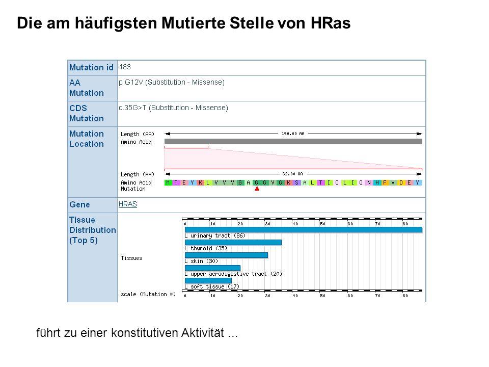Die am häufigsten Mutierte Stelle von HRas führt zu einer konstitutiven Aktivität...