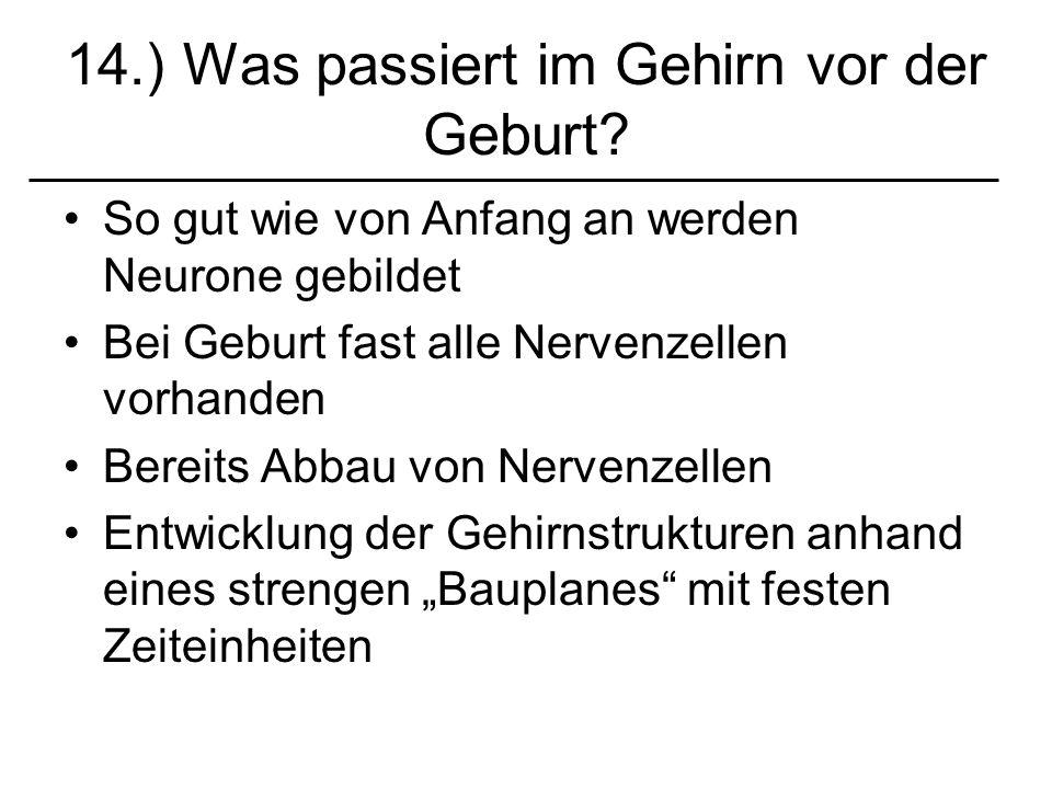 14.) Was passiert im Gehirn vor der Geburt? So gut wie von Anfang an werden Neurone gebildet Bei Geburt fast alle Nervenzellen vorhanden Bereits Abbau