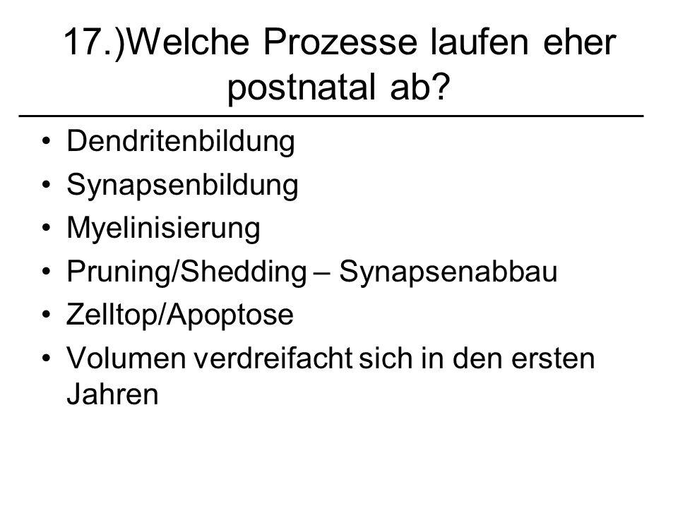 17.)Welche Prozesse laufen eher postnatal ab? Dendritenbildung Synapsenbildung Myelinisierung Pruning/Shedding – Synapsenabbau Zelltop/Apoptose Volume