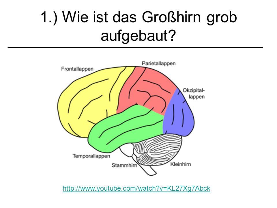 1.) Wie ist das Großhirn grob aufgebaut? http://www.youtube.com/watch?v=KL27Xg7Abck