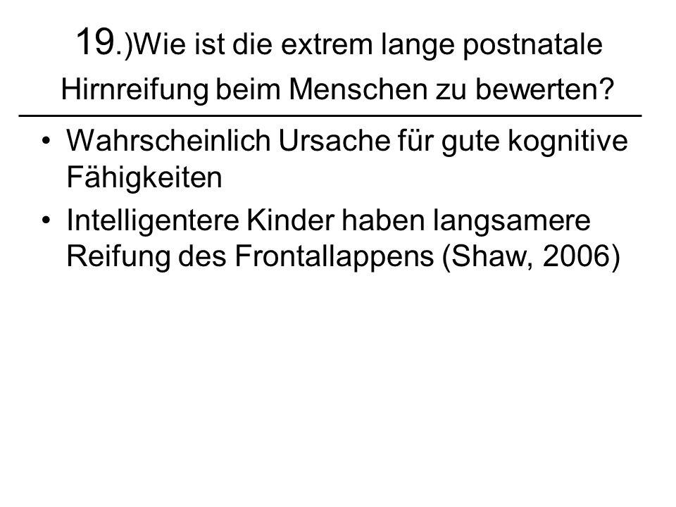 19.)Wie ist die extrem lange postnatale Hirnreifung beim Menschen zu bewerten? Wahrscheinlich Ursache für gute kognitive Fähigkeiten Intelligentere Ki