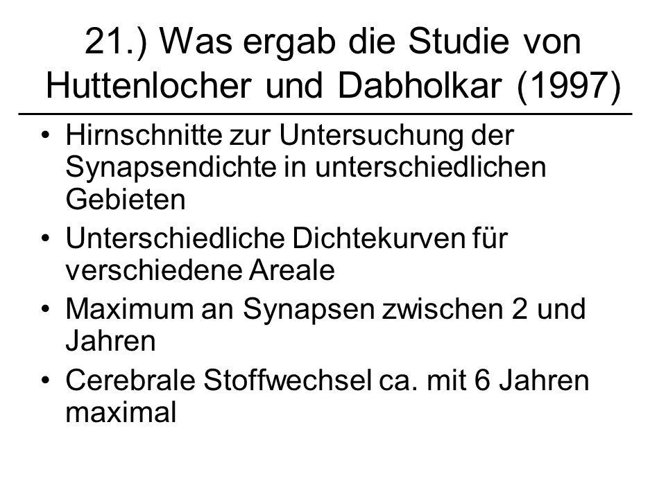 21.) Was ergab die Studie von Huttenlocher und Dabholkar (1997) Hirnschnitte zur Untersuchung der Synapsendichte in unterschiedlichen Gebieten Untersc