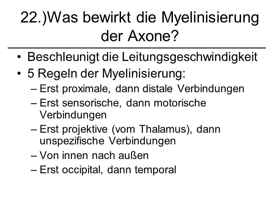 22.)Was bewirkt die Myelinisierung der Axone? Beschleunigt die Leitungsgeschwindigkeit 5 Regeln der Myelinisierung: –Erst proximale, dann distale Verb