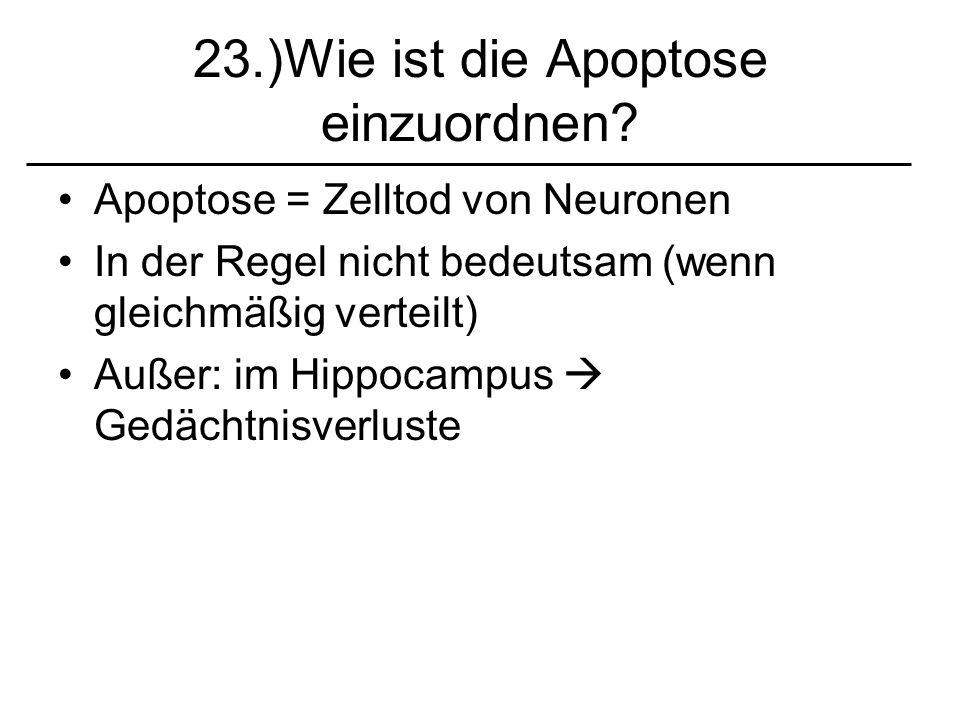 23.)Wie ist die Apoptose einzuordnen? Apoptose = Zelltod von Neuronen In der Regel nicht bedeutsam (wenn gleichmäßig verteilt) Außer: im Hippocampus G