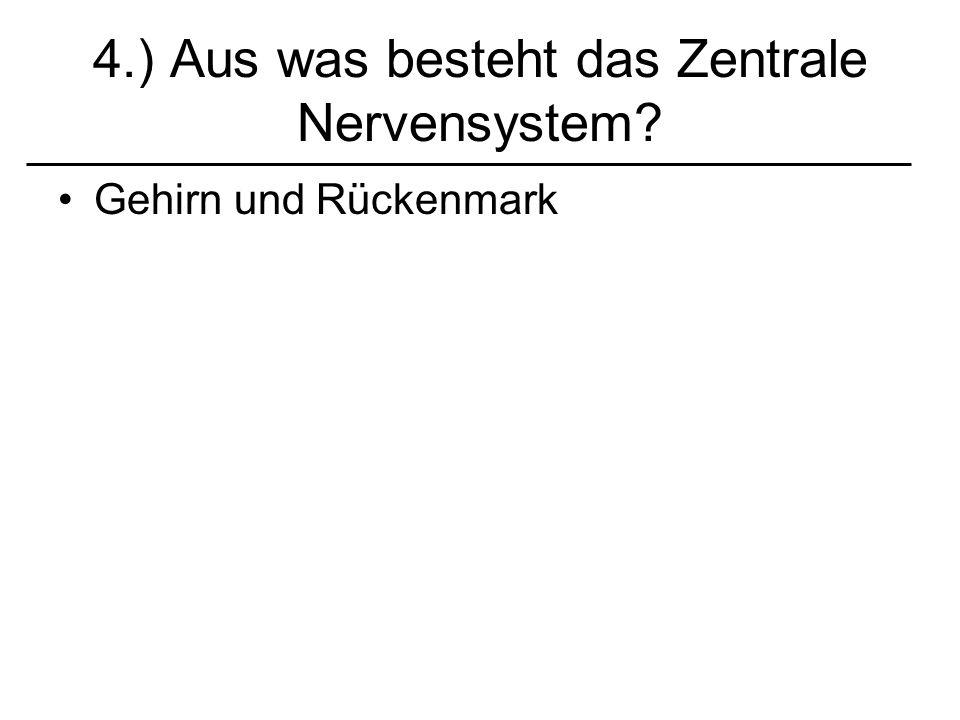 4.) Aus was besteht das Zentrale Nervensystem? Gehirn und Rückenmark
