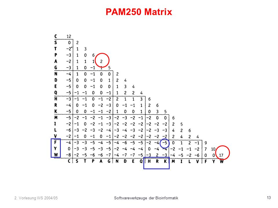 2. Vorlesung WS 2004/05Softwarewerkzeuge der Bioinformatik 13 PAM250 Matrix