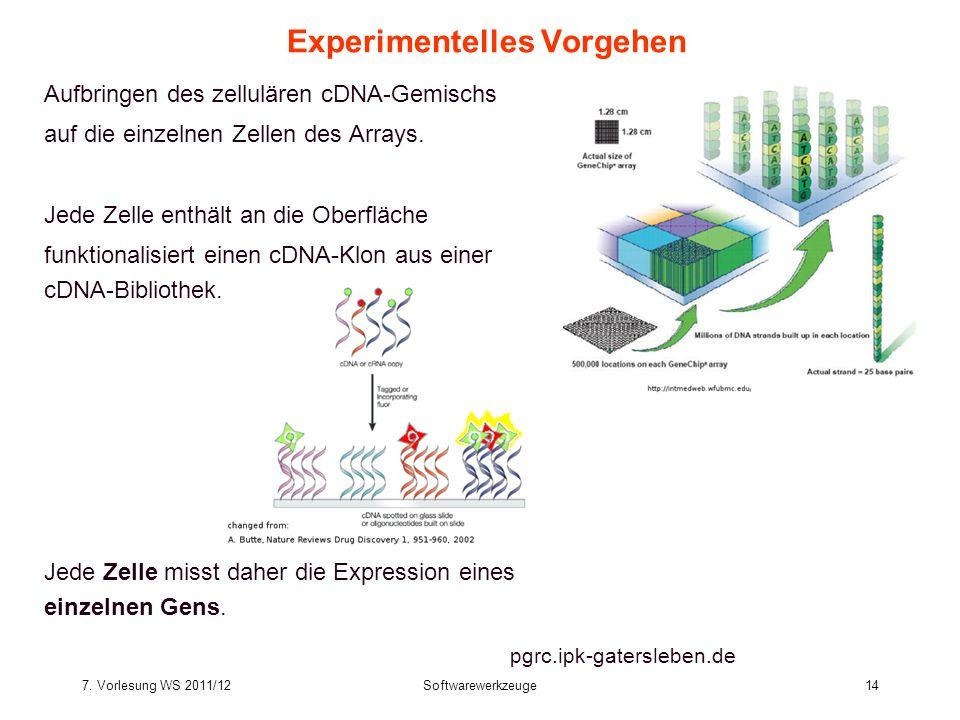 7. Vorlesung WS 2011/12Softwarewerkzeuge14 Experimentelles Vorgehen Aufbringen des zellulären cDNA-Gemischs auf die einzelnen Zellen des Arrays. Jede