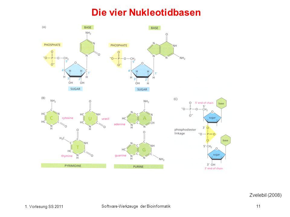 1. Vorlesung SS 2011 Software-Werkzeuge der Bioinformatik11 Die vier Nukleotidbasen Zvelebil (2008)