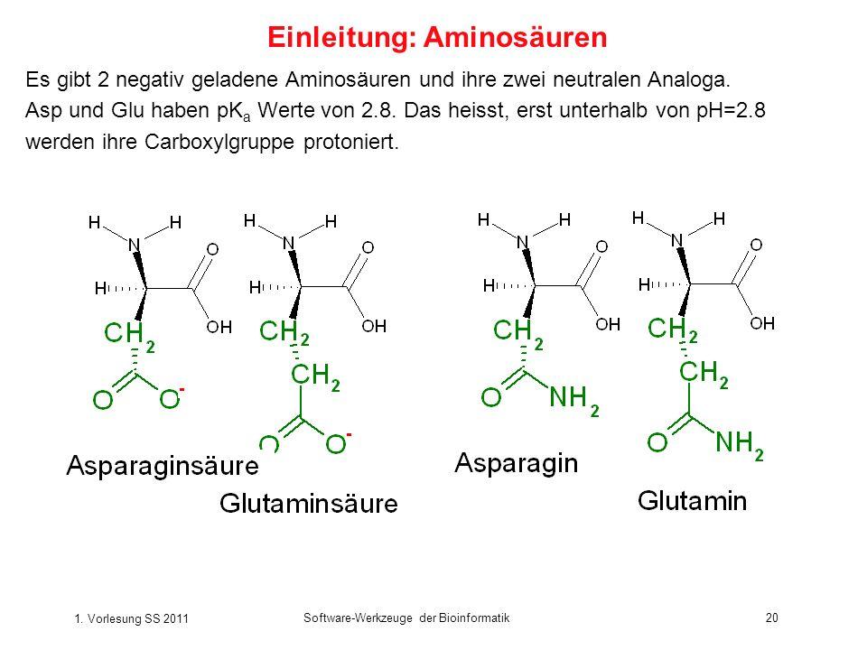 1. Vorlesung SS 2011 Software-Werkzeuge der Bioinformatik20 Es gibt 2 negativ geladene Aminosäuren und ihre zwei neutralen Analoga. Asp und Glu haben
