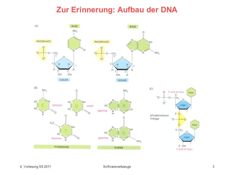 4. Vorlesung SS 2011Softwarewerkzeuge4 Zur Erinnerung: Aufbau der Doppelstrang-DNA
