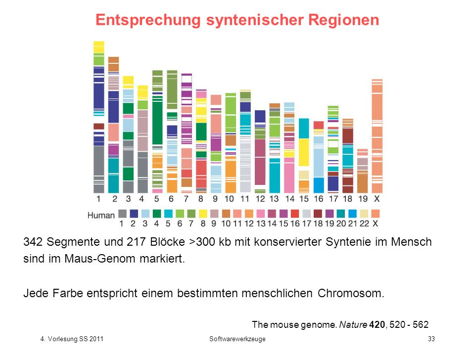 4.Vorlesung SS 2011Softwarewerkzeuge33 The mouse genome.