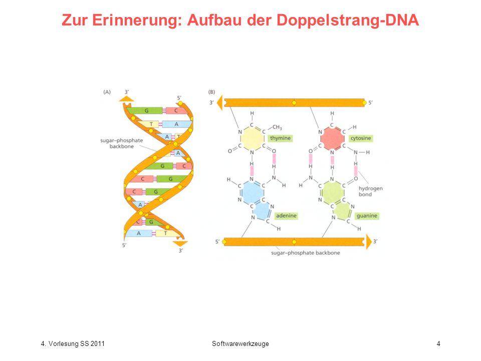 4. Vorlesung SS 2011Softwarewerkzeuge5 Zur Erinnerung: Packung der DNA