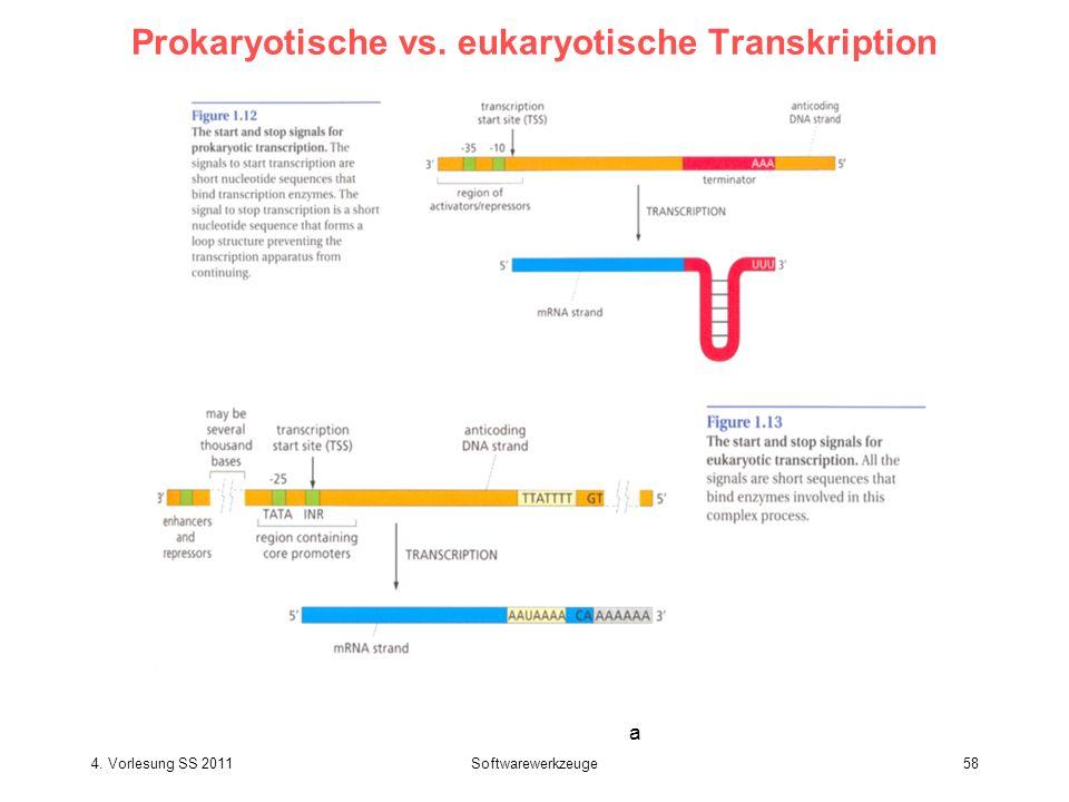 4. Vorlesung SS 2011Softwarewerkzeuge58 Prokaryotische vs. eukaryotische Transkription a