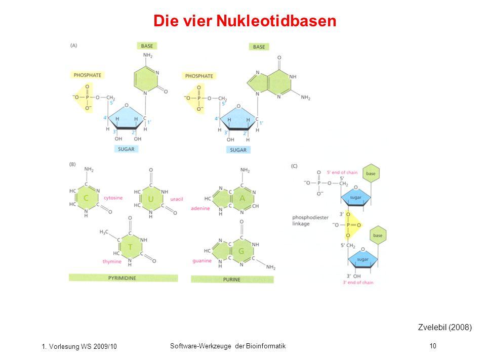 1. Vorlesung WS 2009/10 Software-Werkzeuge der Bioinformatik10 Die vier Nukleotidbasen Zvelebil (2008)