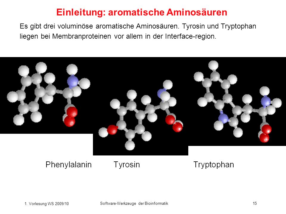1. Vorlesung WS 2009/10 Software-Werkzeuge der Bioinformatik15 Es gibt drei voluminöse aromatische Aminosäuren. Tyrosin und Tryptophan liegen bei Memb