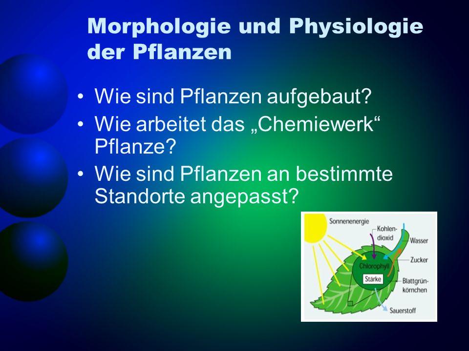 Morphologie und Physiologie der Pflanzen Wie sind Pflanzen aufgebaut? Wie arbeitet das Chemiewerk Pflanze? Wie sind Pflanzen an bestimmte Standorte an