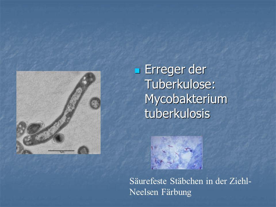 Erreger der Tuberkulose: Mycobakterium tuberkulosis Erreger der Tuberkulose: Mycobakterium tuberkulosis Säurefeste Stäbchen in der Ziehl- Neelsen Färb