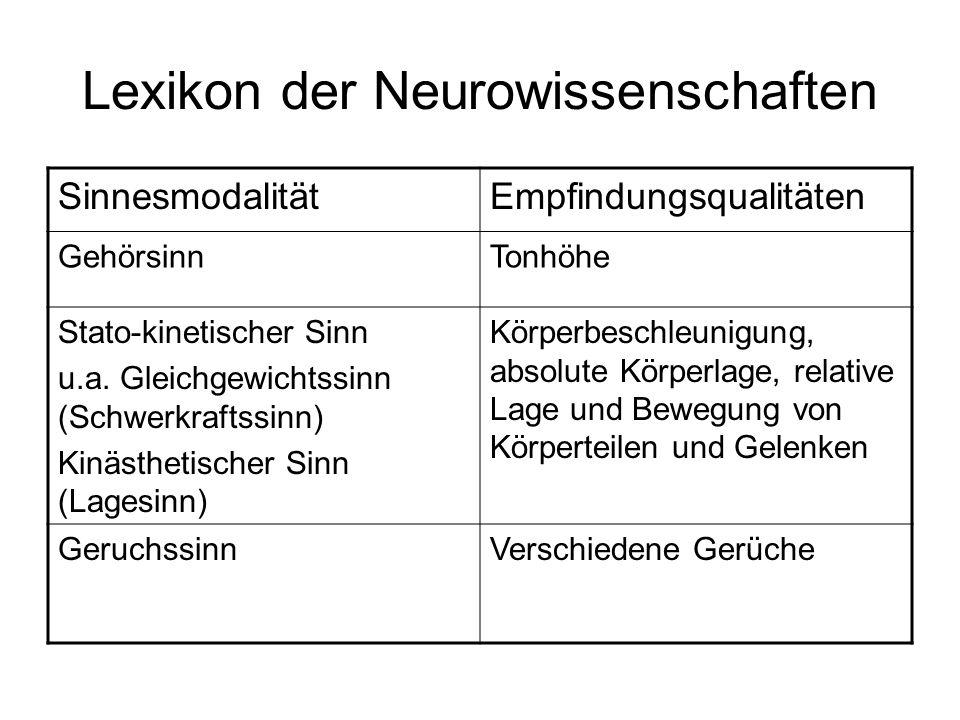 Lexikon der Neurowissenschaften SinnesmodalitätEmpfindungsqualitäten GehörsinnTonhöhe Stato-kinetischer Sinn u.a. Gleichgewichtssinn (Schwerkraftssinn