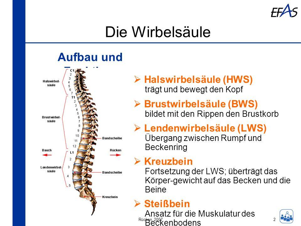 Rücken 2007 Die Wirbelsäule Aufbau und Funktion: 2 Halswirbelsäule (HWS) trägt und bewegt den Kopf Brustwirbelsäule (BWS) bildet mit den Rippen den Br