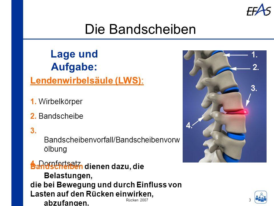 Rücken 2007 Die Bandscheiben Lage und Aufgabe: 3 Lendenwirbelsäule (LWS): 1. Wirbelkörper 2. Bandscheibe 3. Bandscheibenvorfall/Bandscheibenvorw ölbun