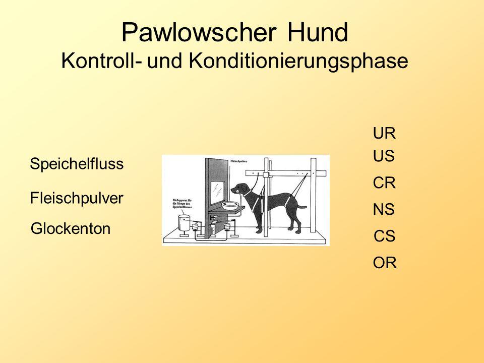 Pawlowscher Hund Kontroll- und Konditionierungsphase Fleischpulver Glockenton NS US UR CR CS Speichelfluss OR