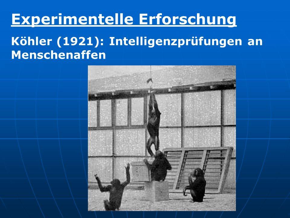 Experimentelle Erforschung Köhler (1921): Intelligenzprüfungen an Menschenaffen