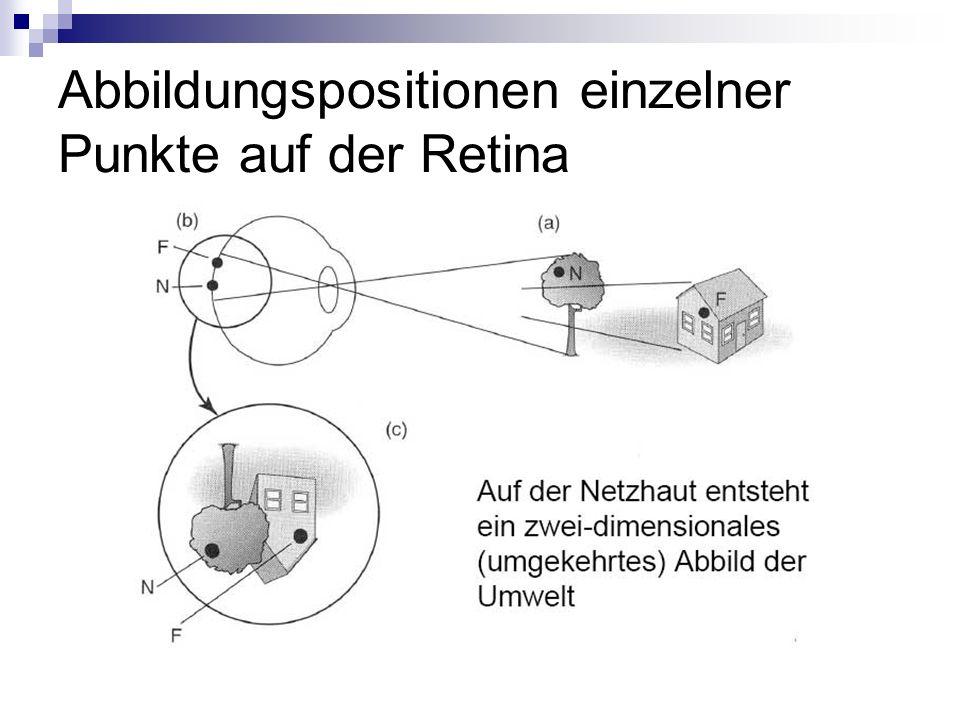 Abbildungspositionen einzelner Punkte auf der Retina